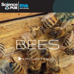 Spotify Bees